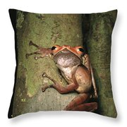A Collets Tree Frog Rhacophorus Colleti Throw Pillow by Tim Laman