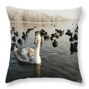 A Cygnets First Winter Throw Pillow by John Chatterley