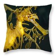 A Diminutive Leafy Sea Dragon Throw Pillow by Jason Edwards