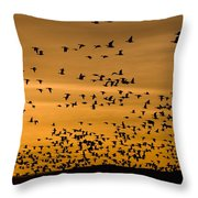 A Flock Of Snow Geese Chen Caerulescens Throw Pillow by Ralph Lee Hopkins