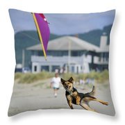 A German Shepherd Leaps For A Kite Throw Pillow by Phil Schermeister