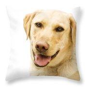 A Golden Labrador Throw Pillow by Chris Knorr
