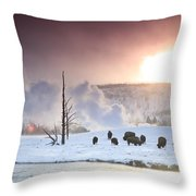 A Group Of Bison Feeding In The Snow Throw Pillow by Drew Rush