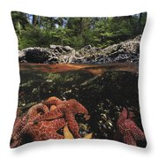 A Group Of Ochre Sea Stars Clustered Throw Pillow by Bill Curtsinger