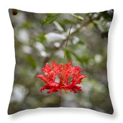A Hibiscus Schizopetalus Flowers Throw Pillow by Taylor S. Kennedy