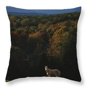 A Horse Stands On A Hill Overlooking Throw Pillow by Sam Kittner