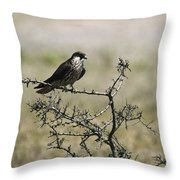 A Juvenile Hobby Perches On A Branch Throw Pillow by Klaus Nigge