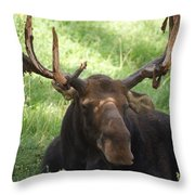 A Moose Throw Pillow by Ernie Echols