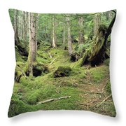 A Mossy Woodland View On Queen Throw Pillow by Bill Curtsinger