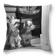 A Pair Of Australian Silky Terriers Throw Pillow by Willard Culver