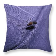 A Pesky Blood Sucking Mosquito Attempts Throw Pillow by Jason Edwards