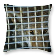 A Red Wolf Canis Rufus Stares Throw Pillow by Joel Sartore