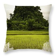 A Rice Field In Asia Throw Pillow by Nathan Lau