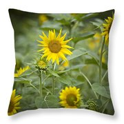 A Row Of Bright Yellow Sunflowers Grow Throw Pillow by Hannele Lahti
