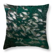 A School Of Tomtate And Glass Minnows Throw Pillow by Michael Wood