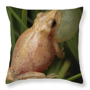 A Spring Peeper Calls For A Mate Throw Pillow by George Grall