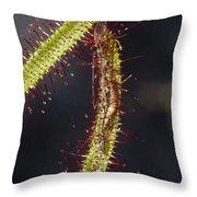 A Sundew Carnivourous Plant, Drosera Throw Pillow by Jason Edwards