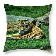 A Tiger's Gaze Throw Pillow by Paul Ward