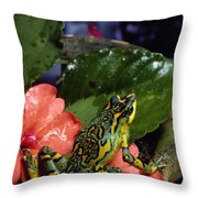 A Tiny Adult Painted Toad Atelopus Throw Pillow by George Grall