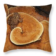 A Toad Sits On A Wooly Velvet Polypore Throw Pillow by Darlyne A. Murawski
