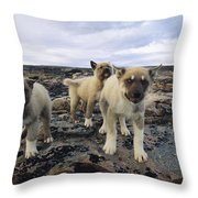 A Trio Of Growling Husky Puppies Throw Pillow by Paul Nicklen