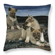 A Trio Of Playful Husky Puppies Throw Pillow by Paul Nicklen