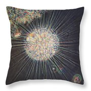 Actinosphaerium Lm Throw Pillow by Eric V. Grave