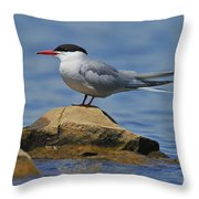 Adult Common Tern Throw Pillow by Tony Beck
