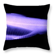 Alewife Throw Pillow by Ted Kinsman