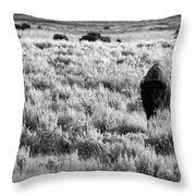 American Bison In Black And White Throw Pillow by Sebastian Musial