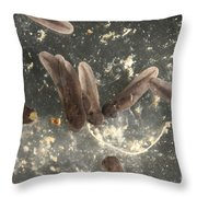 American Toad Tadpoles Throw Pillow by Ted Kinsman