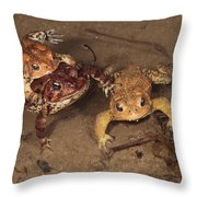 American Tods Are Assembling Throw Pillow by George Grall