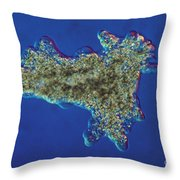 Amoeba Proteus Lm Throw Pillow by Eric V. Grave