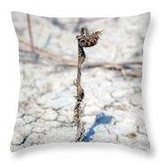 An Old Sunflower Throw Pillow by Joana Kruse