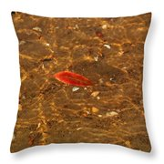 Autumn Afloat Throw Pillow by Rachel Cohen
