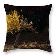 Autumn Light Throw Pillow by Mike  Dawson