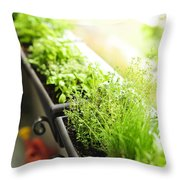 Balcony Herb Garden Throw Pillow by Elena Elisseeva
