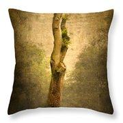 Bare Tree Throw Pillow by Svetlana Sewell