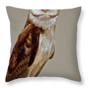 Barn Owl Of Michigan Throw Pillow by LeeAnn McLaneGoetz McLaneGoetzStudioLLCcom