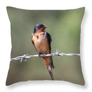 Barn Swallow - Looking Good Throw Pillow by Travis Truelove