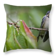 Barn Swallow Hirundo Rustica Fledgling Throw Pillow by Cyril Ruoso