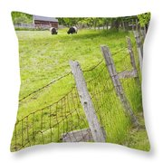 Belted Galloway Cows Farm Rockport Maine Throw Pillow by Keith Webber Jr