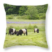 Belted Galloway Cows Pasture Rockport Maine Photograph Throw Pillow by Keith Webber Jr