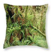 Bigleaf Maple Acer Macrophyllum Trees Throw Pillow by Gerry Ellis