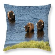 Bison Enjoying The Water Throw Pillow by Paul Cannon