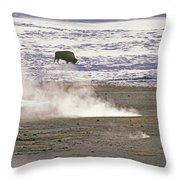 Bison Grazing Near Hot Springs Throw Pillow by Gordon Wiltsie
