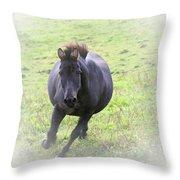 Black Zebra Throw Pillow by Karol  Livote