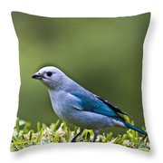 Blue-grey-tanager Throw Pillow by Heiko Koehrer-Wagner