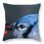 Blue Jay Throw Pillow by Photo Researchers, Inc.