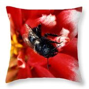 Blue Orchard Bee Throw Pillow by Science Source
